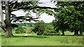 ST5705 : Parkland, Melbury Sampford (2) by Stephen Richards