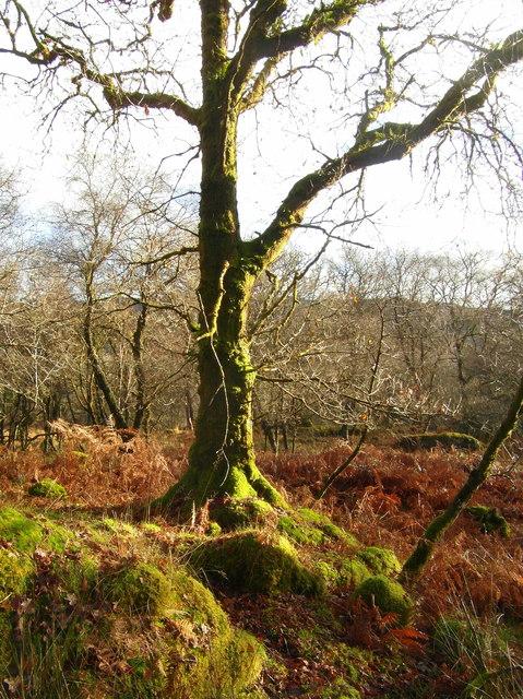 Woodland near Avinagillan