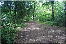 SE3158 : Path, Bilton Beck Wood by N Chadwick