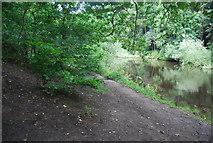SE3158 : River Nidd, Nidd Gorge by N Chadwick