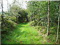 S4329 : The Kilmacoliver Loop Walk in a plantation by Humphrey Bolton