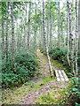 S4328 : Footbridge on the path through the plantation by Humphrey Bolton