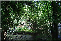 SE3258 : River Nidd partially hidden by trees by N Chadwick