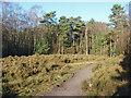 SU8365 : Heathland near Crowthorne by Alan Hunt