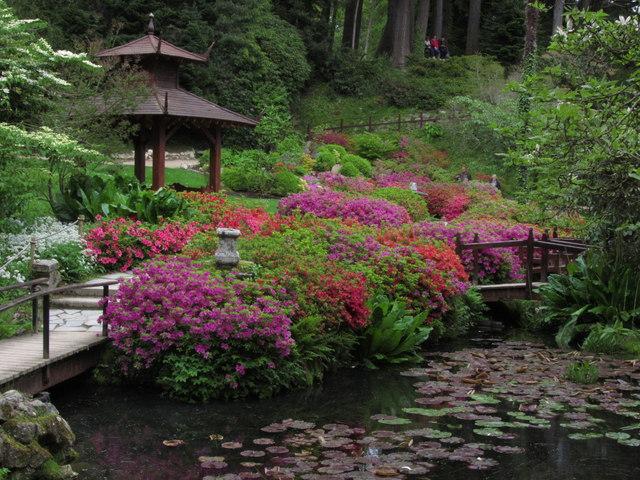 Powerscourt Gardens - Japanese Gardens © Colin Park :: Geograph Ireland