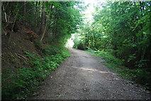 SE3357 : Track, Nidd Gorge by N Chadwick
