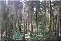 SE3357 : Woodland, Scotton Banks by N Chadwick