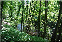 SE3357 : In the Nidd Gorge by N Chadwick