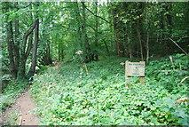 SE3357 : Nidd Gorge Woods by N Chadwick