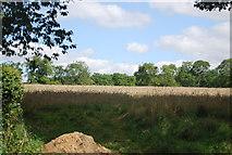 SE3458 : Wheat by the B6165 by N Chadwick