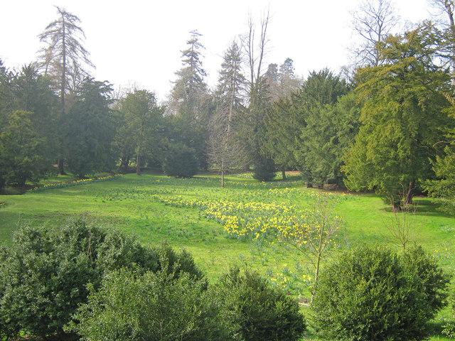 Daffodil Glen at Belton House Gardens