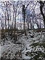 SE2704 : Woodland footpath steps by Steve  Fareham