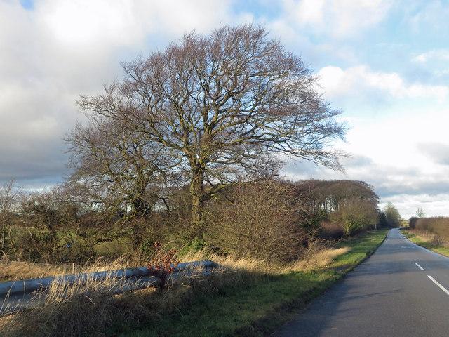 Race Lane Near Melton High Wood