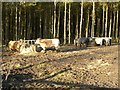 NZ0455 : Cattle feeders in Greymare Hill Plantation by Oliver Dixon