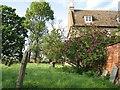 SK8616 : Lilac time in Teigh churchyard by John Sutton