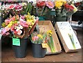 SJ9494 : Daffodils 3 for £2.00  by Gerald England
