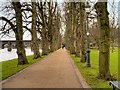 SD5328 : Riverside Walk, Avenham Park by David Dixon