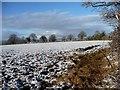 SJ4462 : Farmland west of Sandy Lane, Saighton [1] by Christine Johnstone