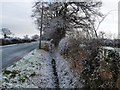 SJ4660 : Roadside ditch, west of Grange Farm by Christine Johnstone