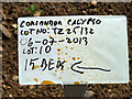 TQ0285 : Coriander planting details, Rush Hill by Robin Webster