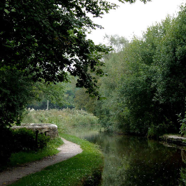 Forest canal peak