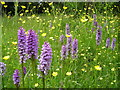 SU8090 : Orchids on Moorend Common by Mark Percy