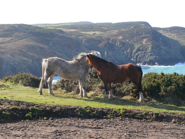 Merlod ger Pen Caer / Ponies by Strumble Head