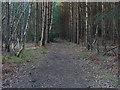 SU8661 : Woodland track, Barossa Common by Alan Hunt