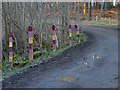 SU8762 : Multi coloured fence posts by Alan Hunt