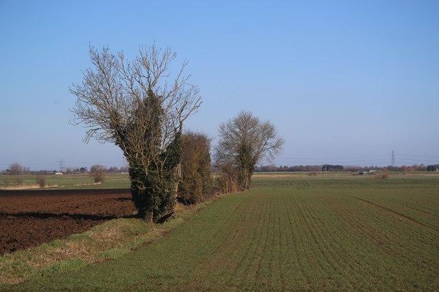 Field boundary at Padney