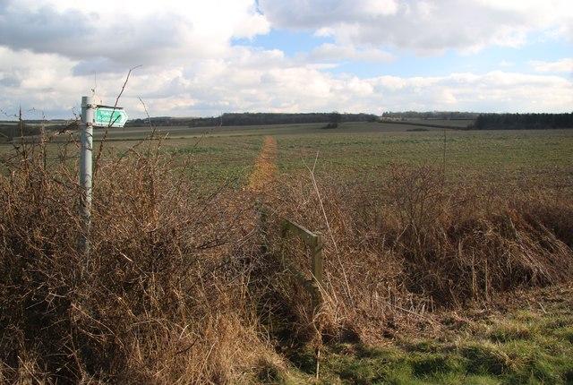 Footpath to Cowlinge