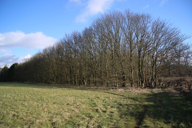 Copse at Kirtling