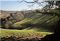 SX8158 : Shadows by the drive to Sharpham : Week 7