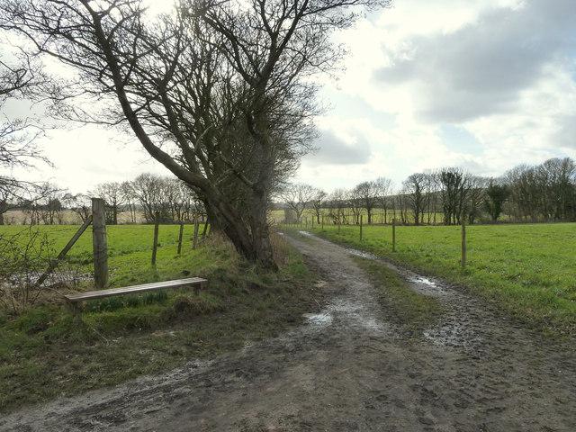 Bench on Spencer's Lane, Gathurst