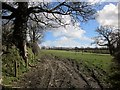 SX3174 : Field, Rylands by Derek Harper