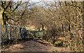 SD7211 : Footbridge over Eagley Brook by Ian Greig