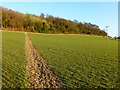 SU8199 : Farmland, Saunderton by Andrew Smith