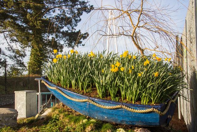 Boatload of daffodils