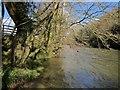 SX3973 : River Tamar at Lamerhooe Ford by Derek Harper