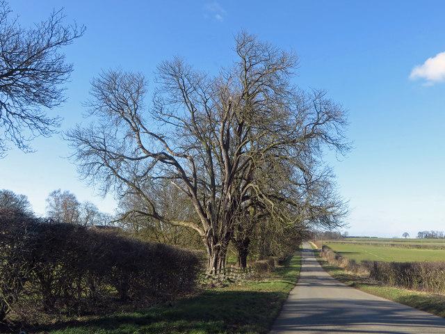 Burnham Road near Barton Lodge
