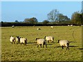 SP7919 : Pasture, Hardwick by Andrew Smith