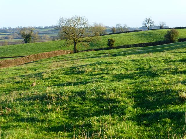 Pasture, Weedon