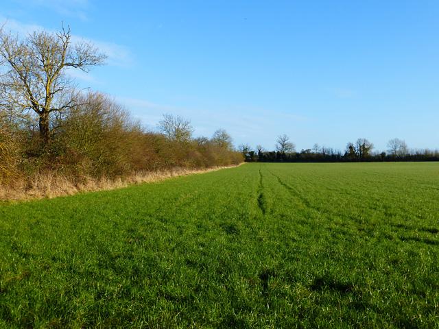 Farmland, Weedon