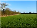 SP8116 : Farmland, Weedon by Andrew Smith
