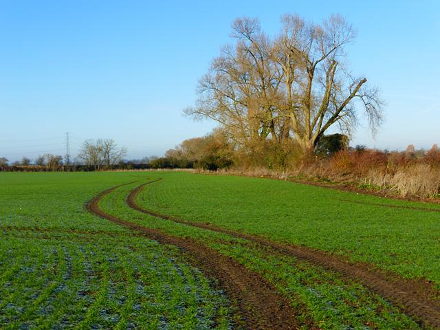 Farmland, Stoke Mandeville