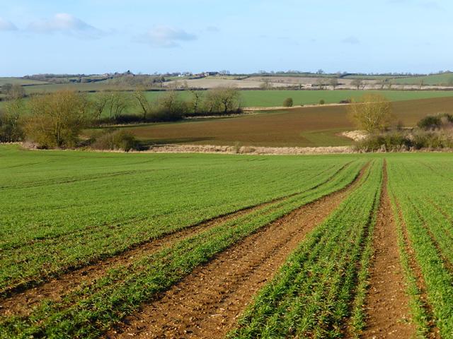 Farmland, Cublington