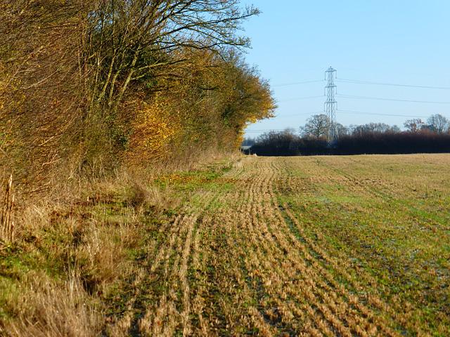 Farmland, Ellesborough