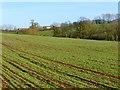 SP8223 : Farmland, Stewkley by Andrew Smith