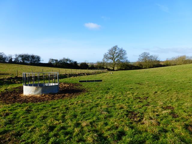 Pasture, Cublington
