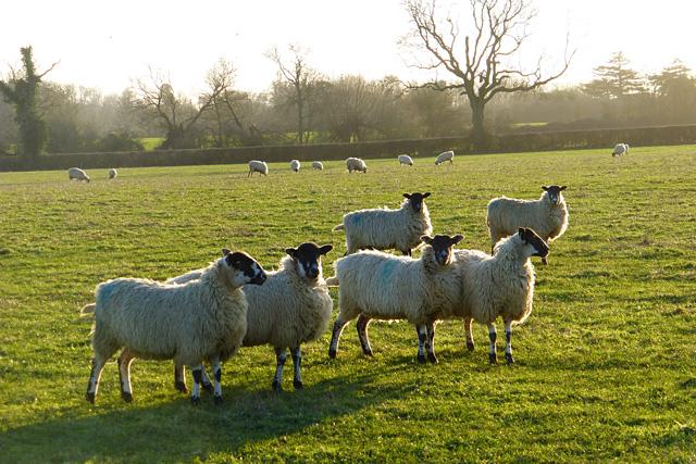 Pasture, Aston Abbotts